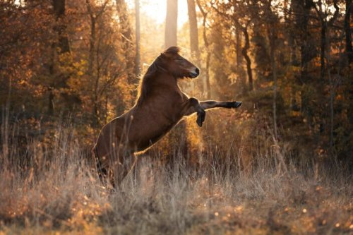 8 Horse Photography Tips for Impactful and Creative Photos