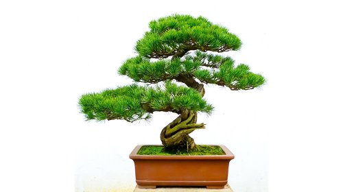 Growing Trees for Profit - These Are the Best to Grow
