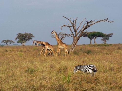 Safari in Tansania – die schönsten Nationalparks, Sehenswürdigkeiten, Land und Leute