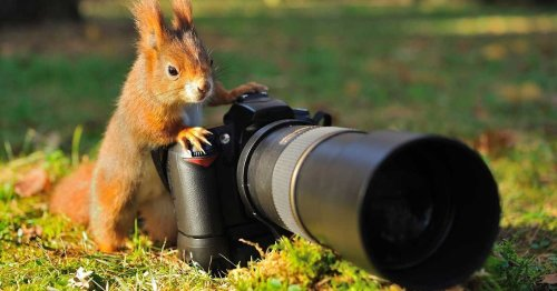 28 examples of animals interrupting wildlife photography from our favorite new Twitter thread.