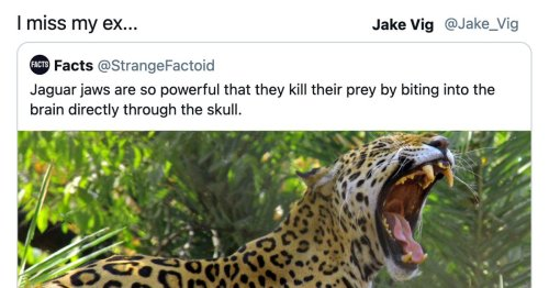 10 funny, weird, wild and heartwarming tweets for you to enjoy today.