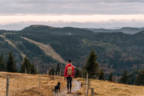 Wandern im Südschwarzwald – die schönsten Touren für Genießer (mit Hund) – Sonne & Wolken