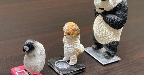 Animals weighing themselves are Japan's newest line of strangely relatable capsule toys figures