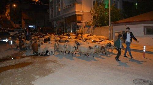 Koyun sürüsünün şehir merkezinden geçişi ilginç görüntüler oluşturdu
