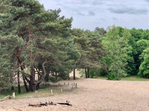 Besenhorster Sandberge: Dünen & Lost Place im Naturschutzgebiet