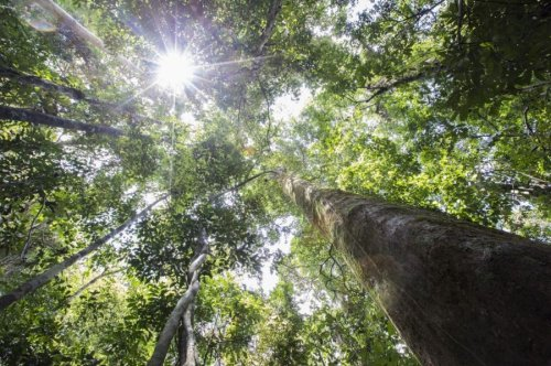 Tropical Forests & Misconceptions