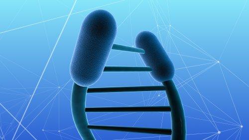 Lebenserwartung und Krebs: Dunkle DNA reguliert Alterungsbremse der Zellen
