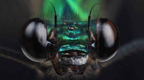 Artenvielfalt: Insektensterben durch Staudämme