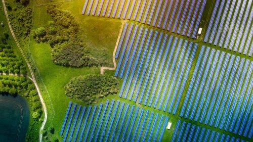 Solarbetriebene Proteinproduktion: Mit Bakterien schonend die Welt ernähren