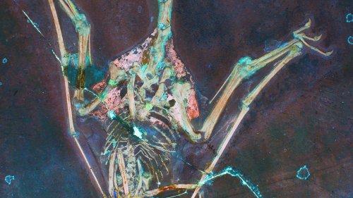 Evolution des Fliegens: Ein Flugsaurier im Laserlicht