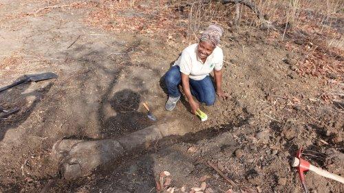 Tendaguru: Revival des Dinosaurierhügels