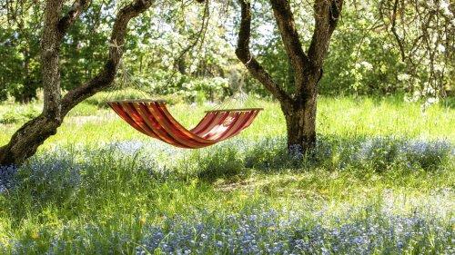 Umweltschutz im Garten: Weniger Ordnungswut, mehr Wildnis wagen