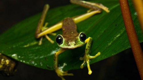Amphibiensterben: Abgesang der Frösche