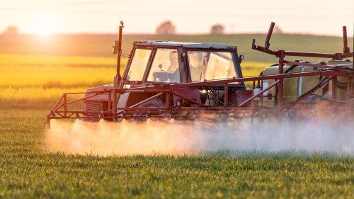 Pestizide: Mit RNA gegen Schädlinge