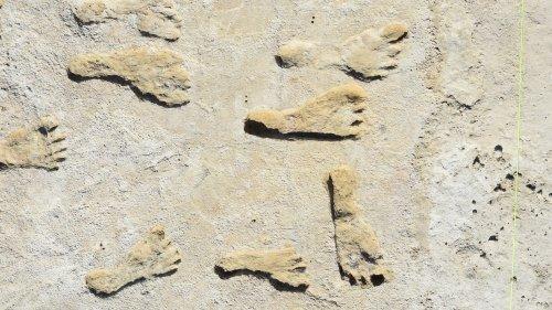 Eiszeitliche Spuren: Fußabdrücke beweisen frühe Besiedlung Amerikas