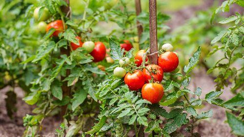 Freistetters Formelwelt: Gartenfreuden