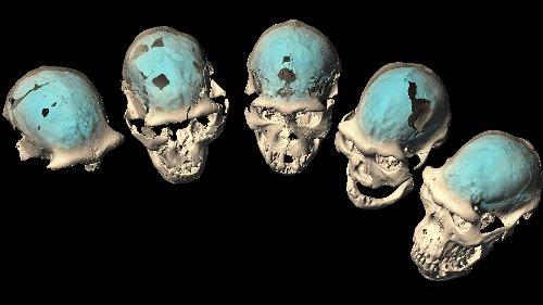 Homo erectus : Älteste Menschen dachten noch nicht wie Menschen