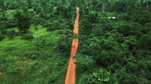 Abholzung: Wunden des Regenwalds bleiben über 40 Jahre bestehen