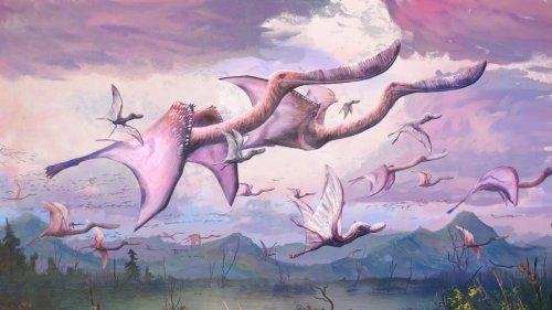 Pterosaurier: Kaum geschlüpft, schon geflogen