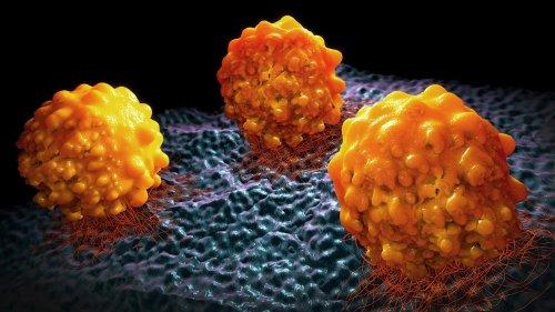 detektor.fm: Mit lebenden Medikamenten gegen Krebs