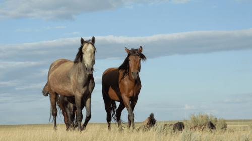 Bronzezeit: Pferdemilch als Erfolgsrezept der europäischen Eroberung