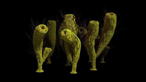 Zu wenig Sauerstoff: Rätsel um mutmaßlich älteste Tierfossilien