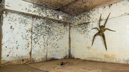 Wildlife Photographer of the Year: Das Monster unter dem Bett