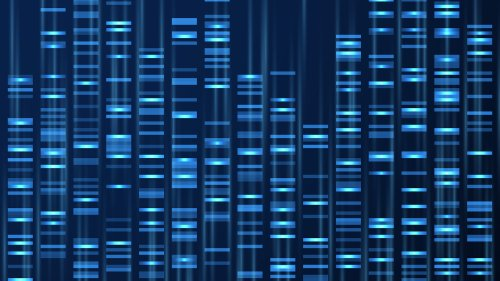 Genetik: Das menschliche Genom ist bald komplett