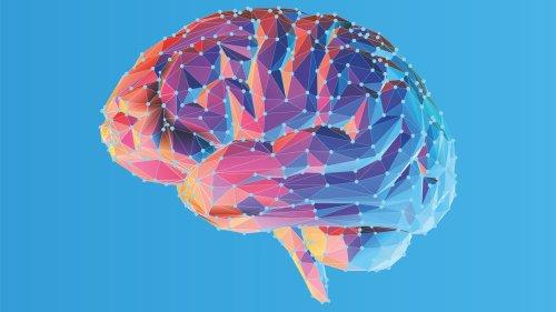 GehirnInfo: Bildung und Funktion neuronaler Schaltkreise