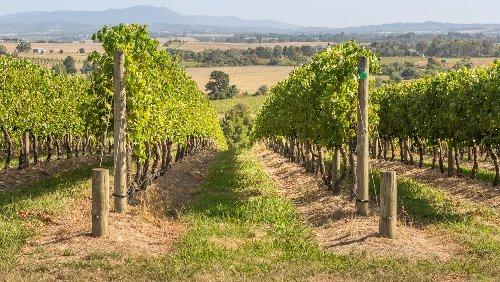 Zoff um Weinproduktion: Australien zitiert China vor ein WTO-Gericht