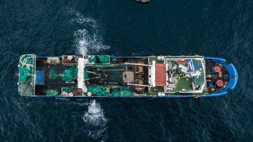 Die 260-Milliarden-Dollar-Industrie: Chinas Trawler fischen Afrikas Küsten leer – für unseren Lachs aus Norwegen