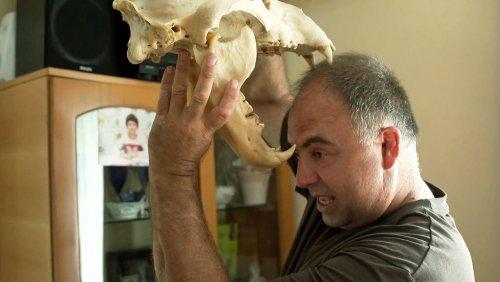 Braunbär-Plage in Rumänien: »Als er mich biss, hat er sein Maul so aufgerissen«