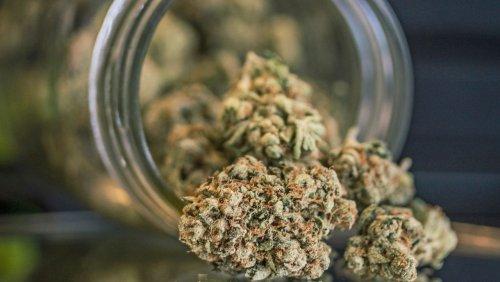 Cannabis in Deutschland: Freier Rausch für freie Bürger