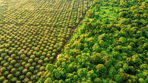 Umwelt: Wir, die Regenwaldzerstörer