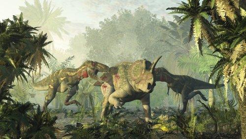 Paläobiologe erklärt Riesenechsen: »Am Ende war der Tyrannosaurus ein Krüppel«