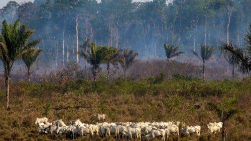 WWF-Bericht: EU auf Platz zwei der Regenwaldvernichter