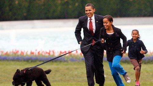 »First Dog«: Obamas trauern um Familienhund Bo