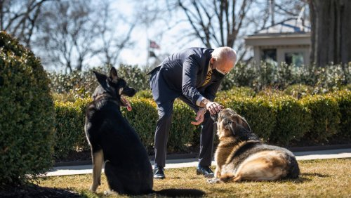 »Ich werde ihn vermissen«: US-Präsident Biden trauert um Familienhund Champ