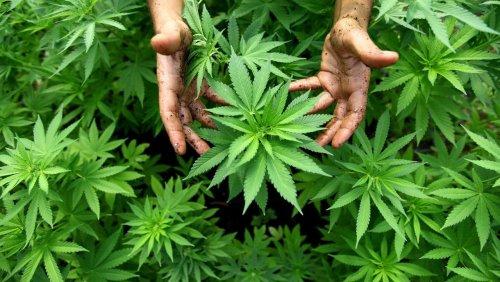 Bayern: 91-Jährige baut in Seniorenheim Marihuana an