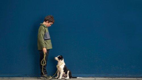 Umgang mit Familienhunden: »Auch Kinder können die Führung übernehmen«