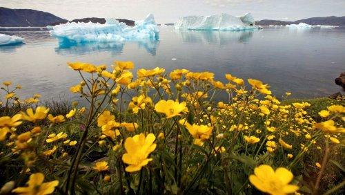 Temperaturen von mehr als 20 Grad: Grönländischer Eisschild schmilzt massiv ab