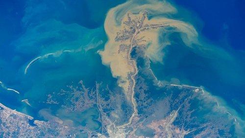 Vor der US-Küste: Sauerstofffreie »Todeszone« im Golf von Mexiko dehnt sich weiter aus