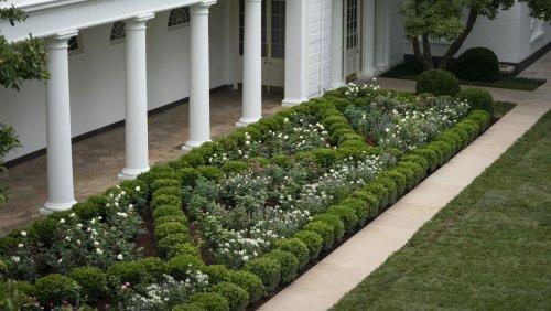 Streit über Rosengarten des Weißen Hauses: Melanias Erbe