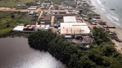 Chinas Fischmehlproduktion in Gambia: Der Geruch des Geldes
