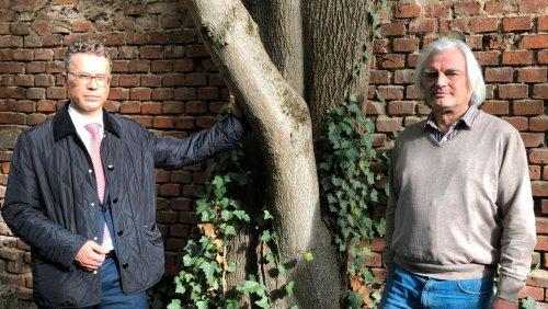 Ihr Freund, der Baum: Der Kampf um den Ahorn von Erlangen