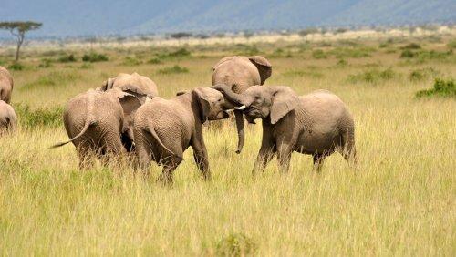 Artenvielfalt: Stiftungen wollen fünf Milliarden Dollar für Biodiversität spenden