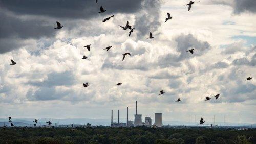 Energiewende: Kohle überholt Wind wieder als wichtigste Stromquelle