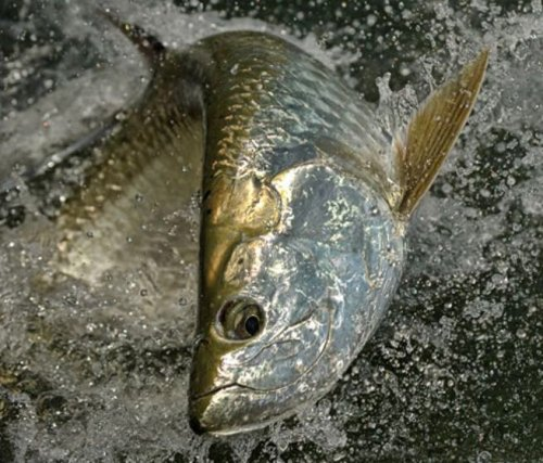 The World's Top 100 Game Fish