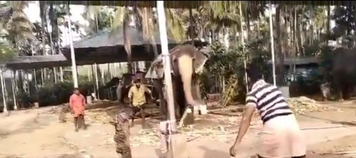 """""""Could replace Malan in T20s"""" - Twitterati respond as Michael Vaughan shares a video of an elephant playing cricket"""