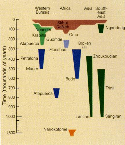 A molecular handle on the Neanderthals